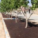 آماده سازی و چمن کاری بلوار امام رضا(ع)
